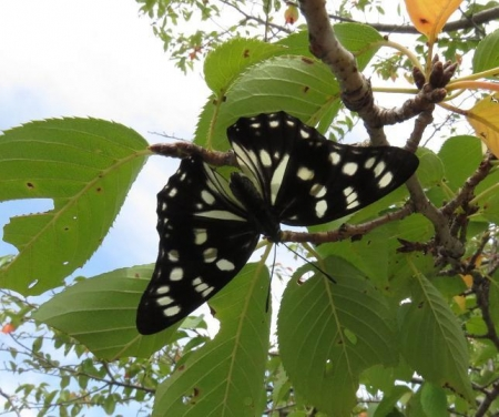蝶と再会 050