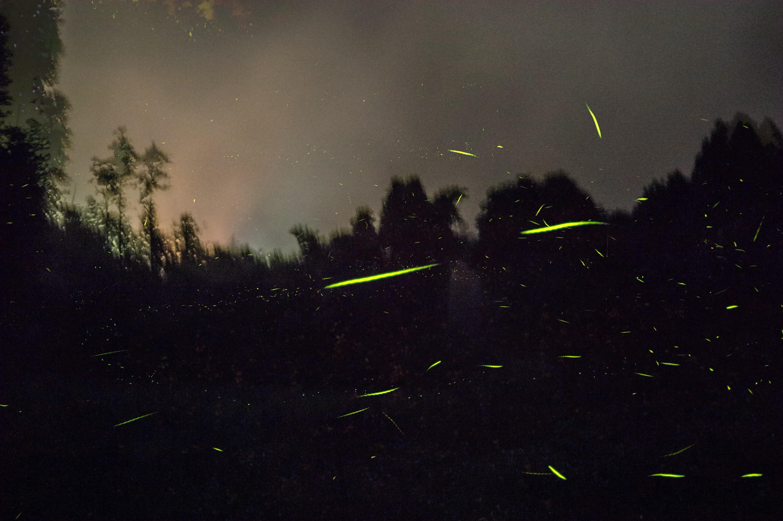 firefly01.jpg