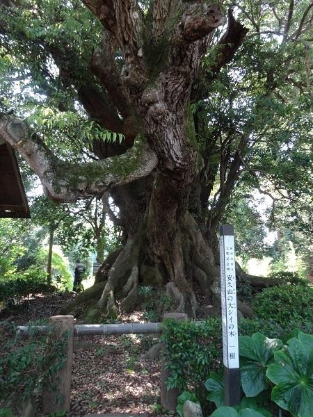 20170520匝瑳 (23)