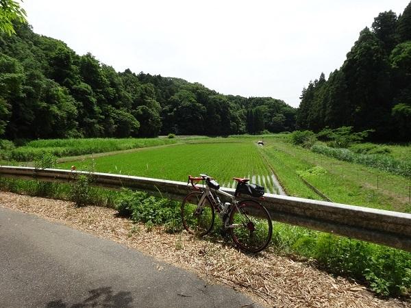 20170603秋元牧場 (4)