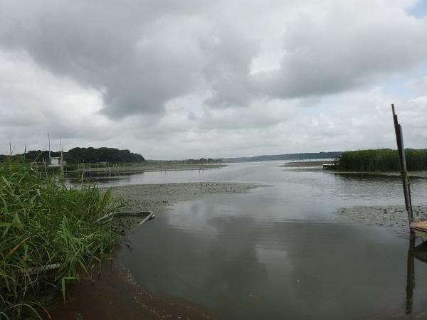 20170805印旛沼周辺 (4)