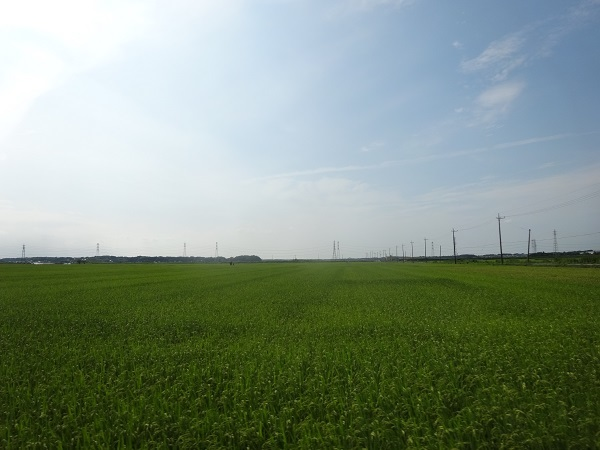 20170805印旛沼周辺 (17)