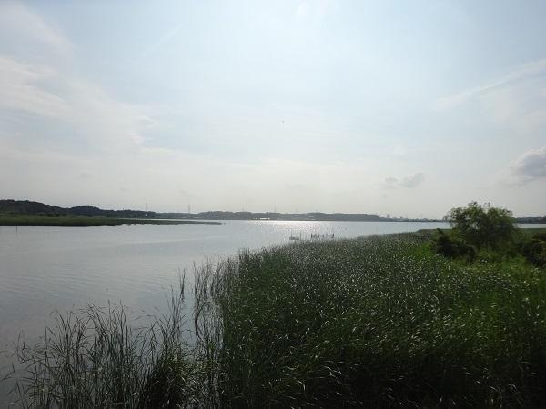 20170805印旛沼周辺 (19)