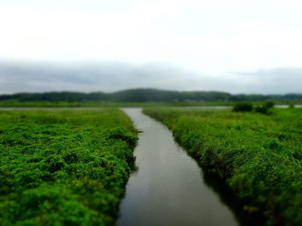 20170812印旛沼 (1)