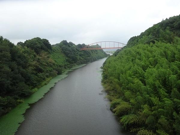 20170812印旛沼 (5)