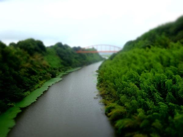20170812印旛沼 (6)
