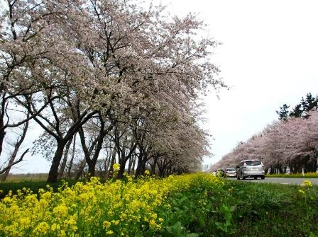 2017.4.30大潟村