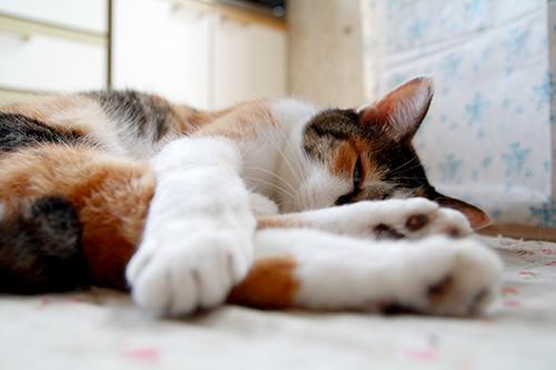 160812 猫2