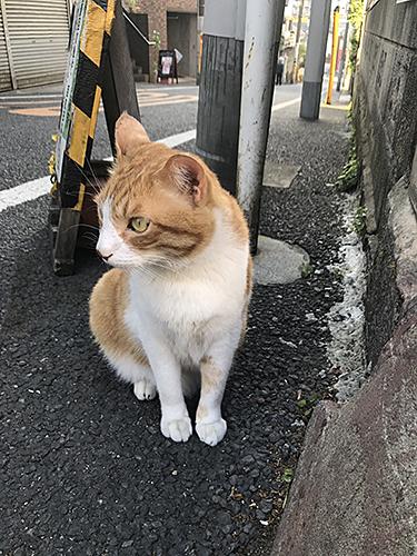 170505 猫2