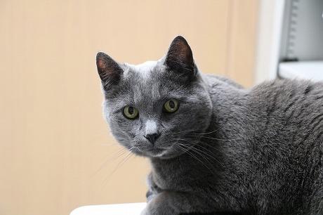 cat-1099132_960_720.jpg