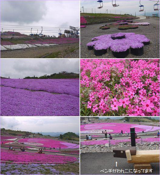 20170524 P1170106 芝桜祭り