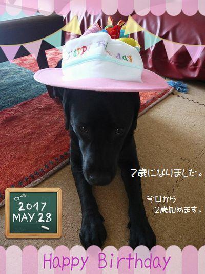20170528 224_deco-2