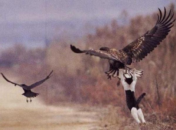 おい!前の鳥を追ってくれ