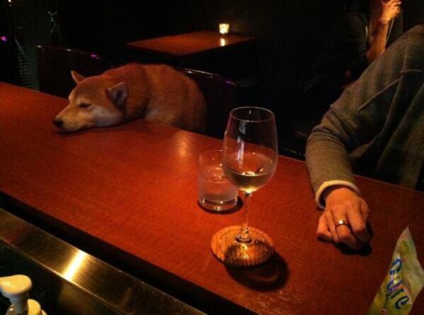ソルティドッグを注文したら塩対応の犬が出てきた