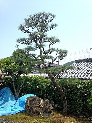 松 5m 2017 (2)