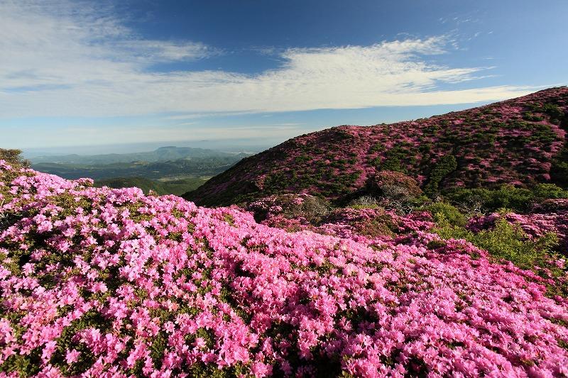 平治岳ミヤマキリシマ0001