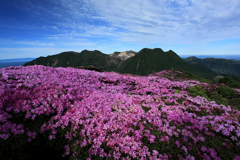 平治岳ミヤマキリシマ0003