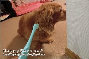 歯磨き拒否2