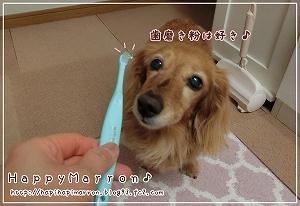 歯磨き拒否3