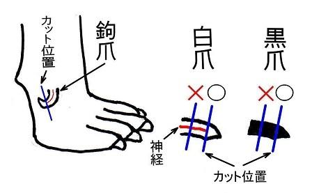 爪切りの位置3