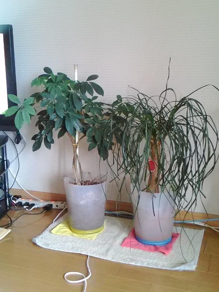 2160828観葉植物.jpg