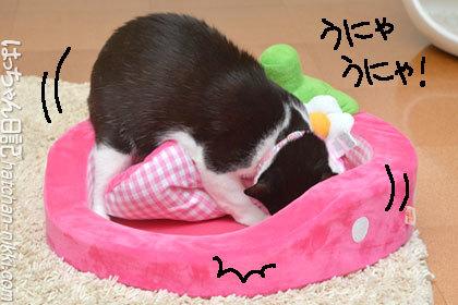 ピンクのいちごベッドを