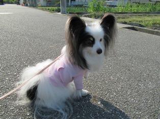 愛犬_14