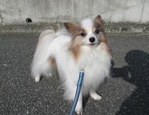 愛犬_15