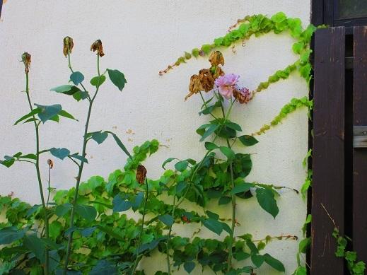 植物さん3