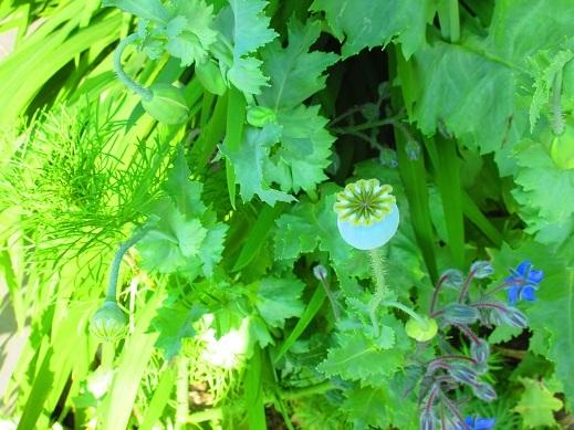 植物のカタチ