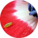 anemone001.jpg