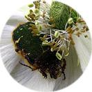 anemone002.jpg