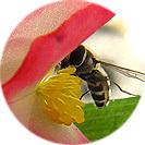 begonia_semperflorens003.jpg