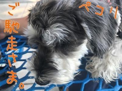 犬用クッキー6