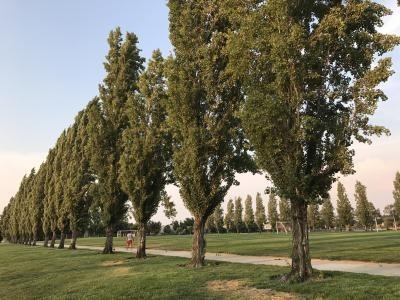 Californiaの公園3