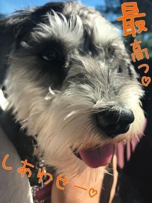 犬用クッキー7