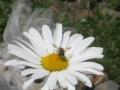ミツバチm