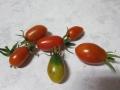 ミニトマトベランダ