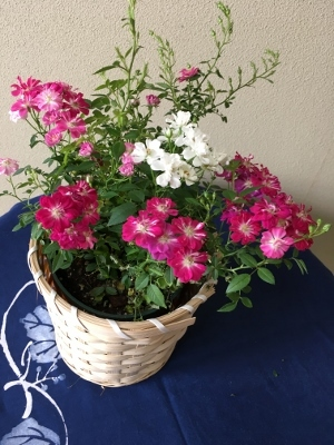 母の日の花美和
