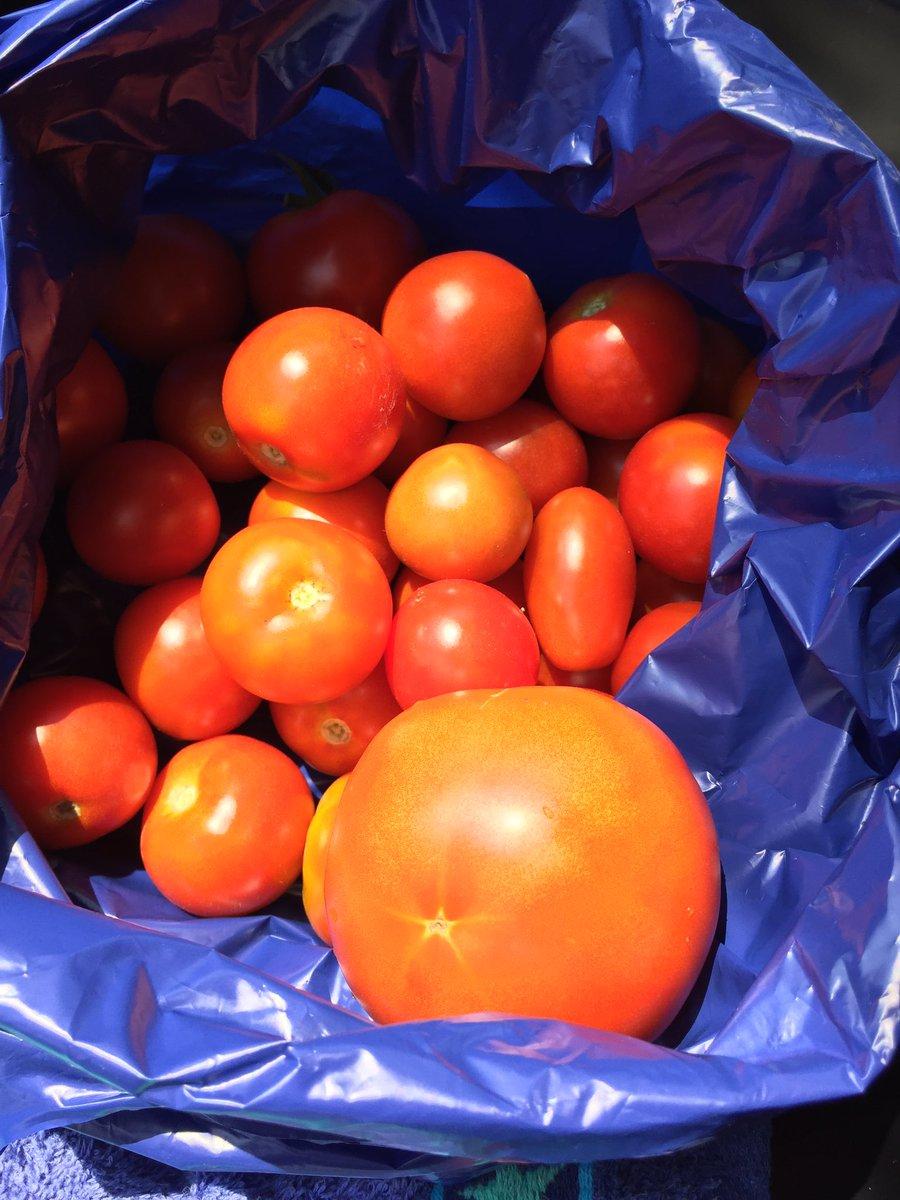 tomatoea.jpg
