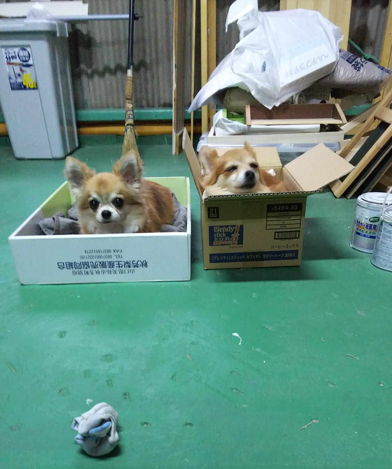 箱入り息子と箱入り娘