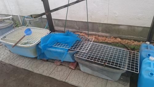 3連タライ水槽