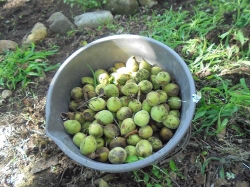 curumi (3)