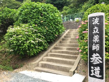 下神谷のハナショウブ・波立薬師のアジサイが咲き始めました! [平成29年6月19日(月)更新]10