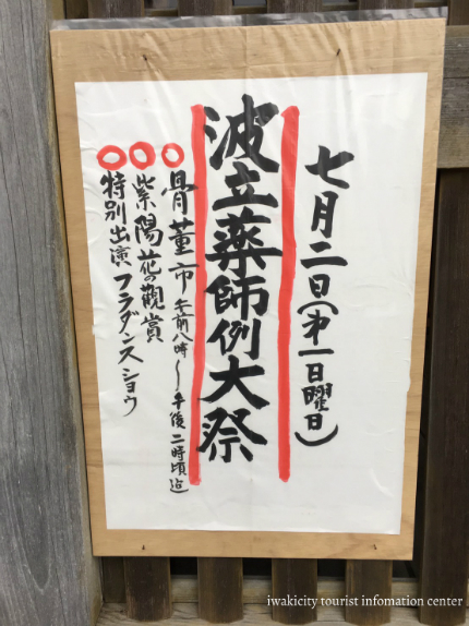 下神谷のハナショウブ・波立薬師のアジサイが咲き始めました! [平成29年6月19日(月)更新]13