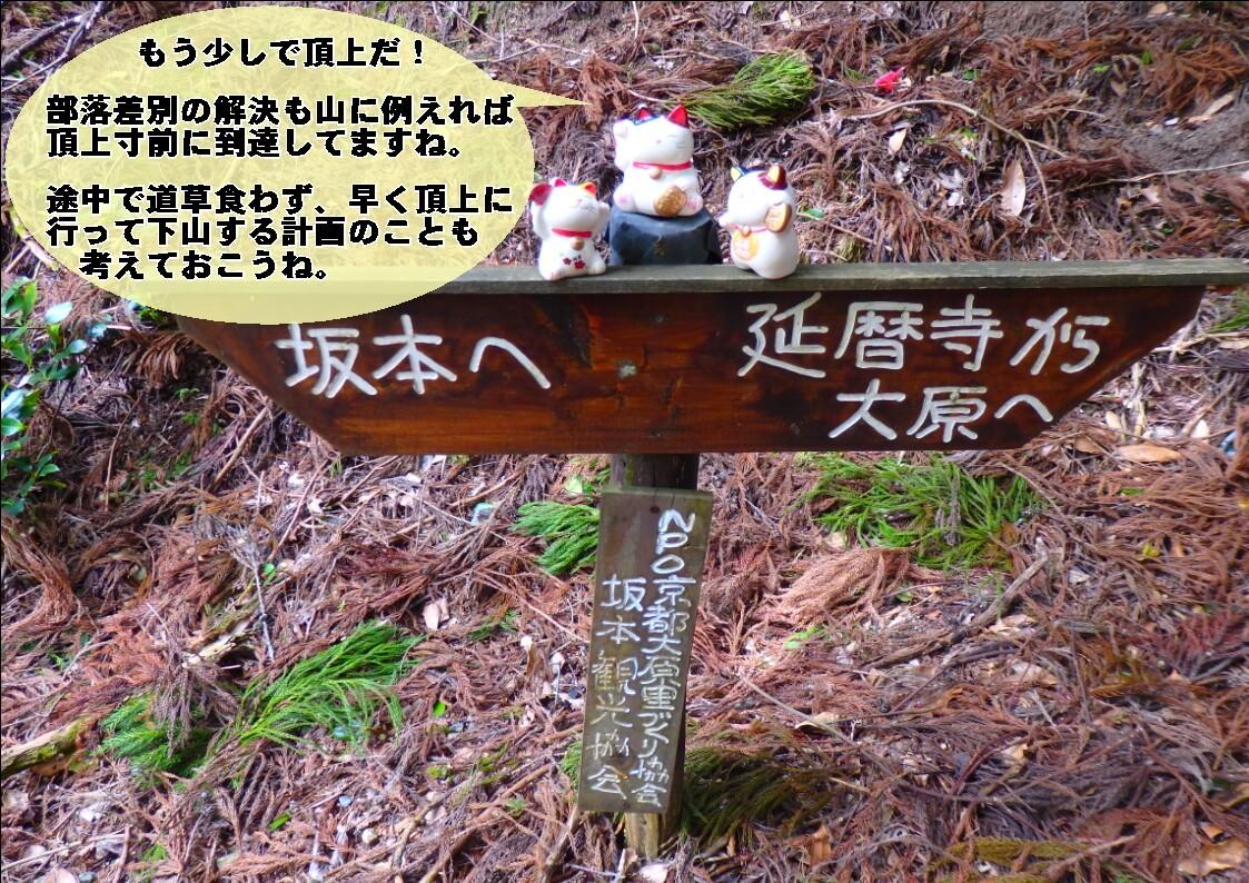 ブログ猫3