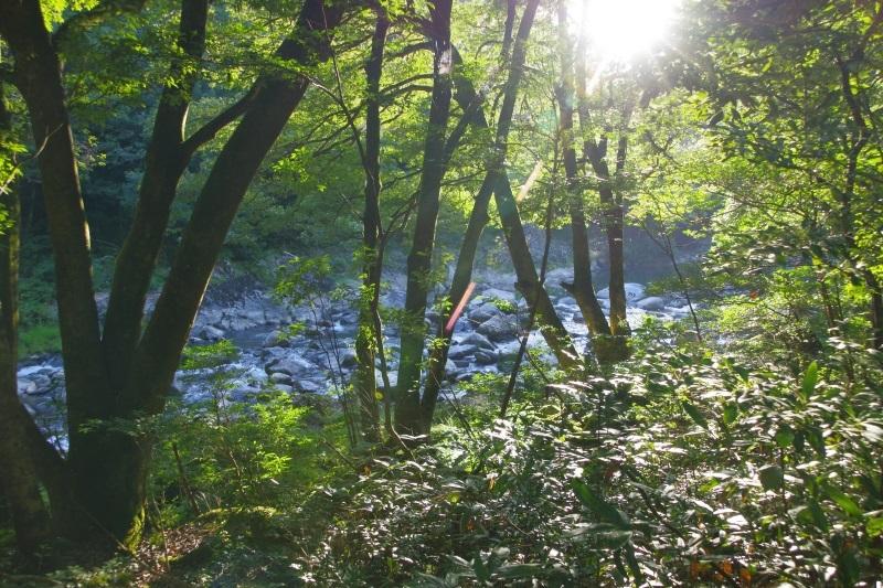 木漏れ日と清流