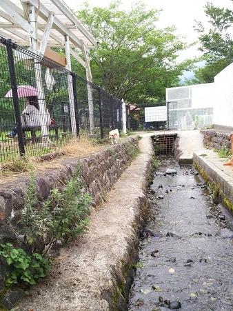 2017-07-29 寄ドッグラン 小川-crop