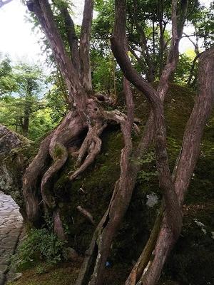 2017-09-15 箱根美術館 庭 石の上にも  -crop