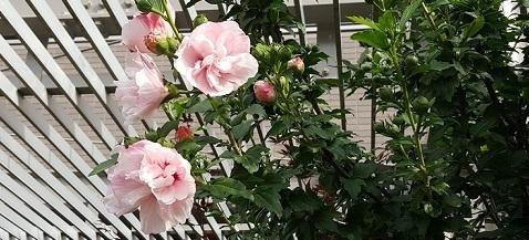 fuyou_20170619202240d51.jpg